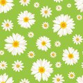 Seamless pattern with daisy flowers on green. Vect Royalty Free Stock Photo