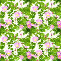 Seamless pattern of dog roses flowers abstract with pink buds and green leafs rose isolated on white background close up studio Stock Images