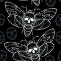 Seamless pattern with dotted Death's head hawk moth or Acherontia atropos in white and skulls