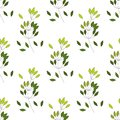 stock image of  Seamless pattern of Eucalyptus palm fern different tree, foliage natural branches, green leaves, herbs, tropical plant hand drawn