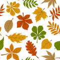 Seamless pattern with fall autumn leaves on white Royalty Free Stock Photo