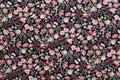 Seamless Pattern, Floral Fabri...