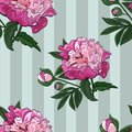 Seamless pattern of flowers and buds of pink peony on a green vertical striped background. Vector.