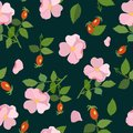 Seamless pattern with flowers and rose hips. Vector illustration. Royalty Free Stock Photo