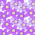 Seamless pattern of forget-me-alpine a wild flower vector illu