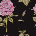 Seamless pattern with gently pink rose flower isolated on black background. Vector illustration. Royalty Free Stock Photo