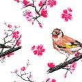 Seamless pattern with goldfinch bird on a blossom branch sakura.