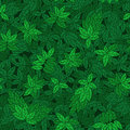 Seamless pattern with green branches of trees can be used for wallpaper fills web page background surface Stock Photos