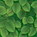 Seamless pattern with green spring leaves of birch ready to use as swatch Stock Photo