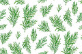 Seamless pattern of green spruce branches on a white background.