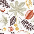 Seamless pattern with hand drawn leaves and seeds illustration. Vector autumn background. Vintage botanical design Royalty Free Stock Photo