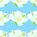 Seamless pattern with jasmine on a blue background. vector illus