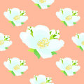 Seamless pattern with jasmine on a pink background. vector illus