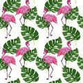 Seamless pattern with jungle tropical monstera leaves and flamin Royalty Free Stock Photo