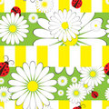 Seamless pattern with ladybirds and chamomile Stock Images