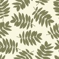 Seamless pattern with leaves of a mountain ash Stock Image