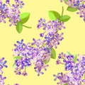 Seamless pattern Lilac branch flowers blooming spring. Vector il