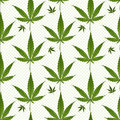 Seamless pattern medical marijuana green leafs over polka dots on white background. Cannabis vector illustration.