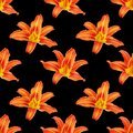 Seamless pattern orange lily flower black background isolated, red & yellow petals lilly repeating ornament, daylily texture