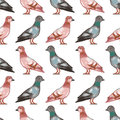 Seamless pattern with pigeons