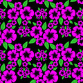 Seamless pattern with pink flowers on the black background is presented Royalty Free Stock Photo