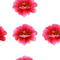 Seamless pattern with pink flowers and ladybird. Royalty Free Stock Photo