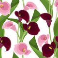 Seamless pattern with pink and purple calla lilies on white green leaves a background Royalty Free Stock Photography