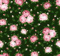 Seamless pattern with pink roses on green. Royalty Free Stock Images