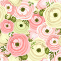 Seamless pattern with pink and white ranunculus flowers. Vector illustration. Royalty Free Stock Photo