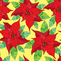 Seamless pattern with Poinsettia flower or Christmas Star in red with green leaves. Traditional Christmas symbol. Royalty Free Stock Photo
