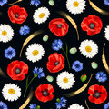 Seamless pattern with poppies, daisies and cornflowers. Vector illustration. Royalty Free Stock Photo