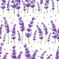 Seamless pattern of provence violet lavender flowers with dots on a white background. Vector illustration.