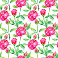 Seamless pattern of a purple roses.Briar and herbs.
