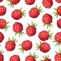 Seamless pattern of realistic image of delicious ripe raspberries Royalty Free Stock Image
