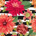 Seamless Pattern with Red Asters Flowers. Floral Background for Fabric Textile, Wallpaper, Wrapping. Watercolor Flowers