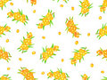 Seamless pattern sea-buckthorn berries Stock Image