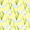 Seamless pattern snowdrop flower blossomed with leaves. Vector i
