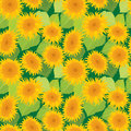 Seamless pattern with sunflowers. Summer season, nature backgrou Royalty Free Stock Photo