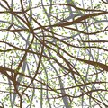 Seamless pattern tangled Brown branches with green leaves on white abstract background for site, blog, fabric. Vector