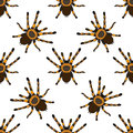Seamless pattern with . tarantula spider Brachypelma smithi hand-drawn tarantula spider Brachypelma smithi. Vector Royalty Free Stock Photo