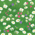 Seamless pattern texture of grass and wild flowers background for natural or eco design ready to use as swatch Stock Image