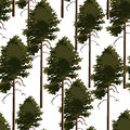 Seamless pattern tree pine