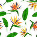 Seamless pattern with tropical exotic flower bird of paradise, strelitzia and leaves. Royalty Free Stock Photo
