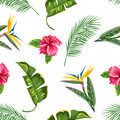 Seamless pattern with tropical leaves and flowers. Palms branches, bird of paradise flower, hibiscus Royalty Free Stock Photo