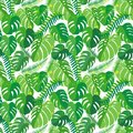 Seamless pattern with tropical monstera leaves.