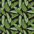Seamless Pattern. Tropical Palm Leaves Background. Banana Leaves Royalty Free Stock Photo
