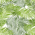 Seamless Pattern. Tropical Palm Leaves Background Royalty Free Stock Photo
