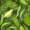 Seamless Pattern. Tropical Palm Leaves Background