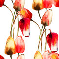 Seamless pattern with tulips flowers watercolor illustration Stock Photos