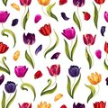 Spring seamless pattern with multi-colored tulip flowers, leaves and petals on a white background.